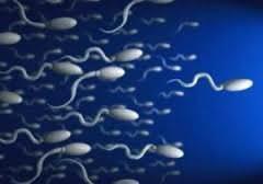 Условия сдачи спермограммы