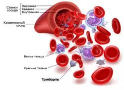кровеносный сосуд - состав