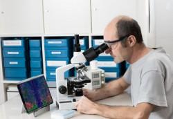 Как было ранее замечено, видеоторакоскопическая биопсия осуществляется через небольшой разрез на грудной клетке.